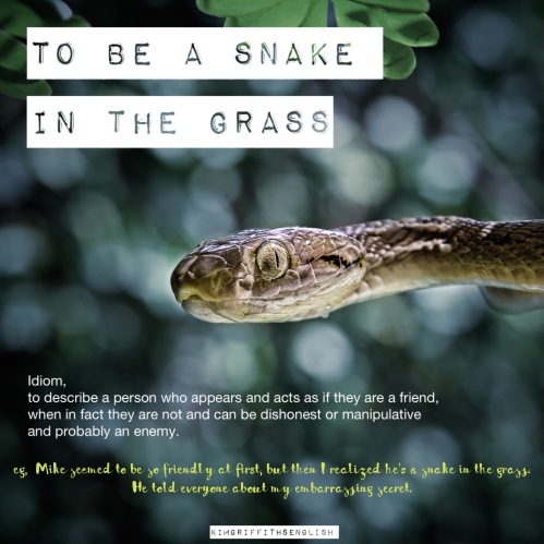 A snake in the grass idiom. How to describe a bad person, bad character Adjectives, idiom and more. from the English as a second language teaching blog - @kimgriffithsenglish
